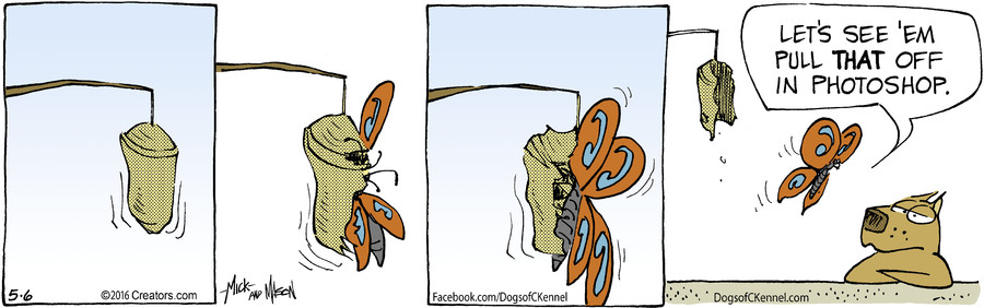 Dogs of C-Kennel for May 06, 2016