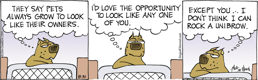 Dogs of C-Kennel for Aug 31, 2016