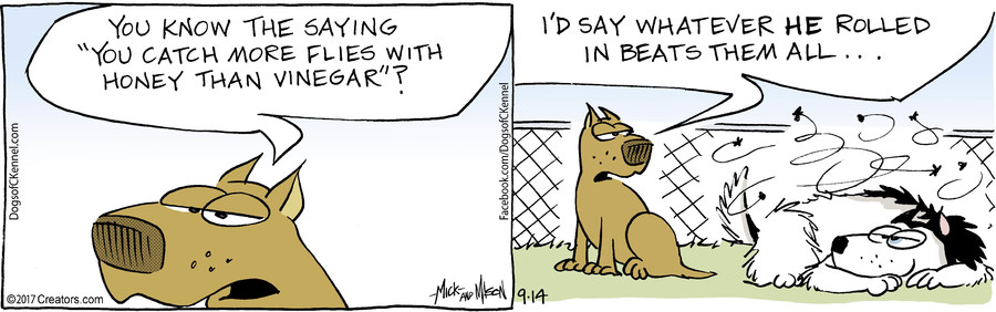 Dogs of C-Kennel for 09/14/2017