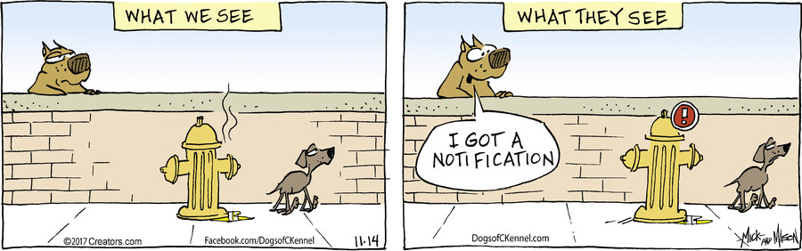 Dogs of C-Kennel for 11/14/2017