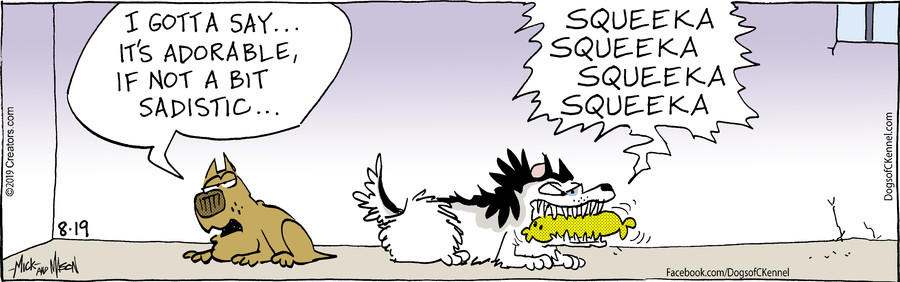 Dogs of C-Kennel for Aug 19, 2019