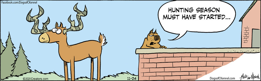 Dogs of C-Kennel for Nov 24, 2020
