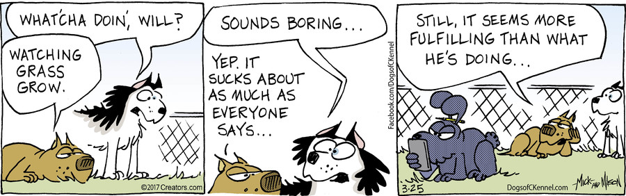 Dogs of C-Kennel for Mar 25, 2017