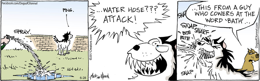 Dogs of C-Kennel for Jun 28, 2017