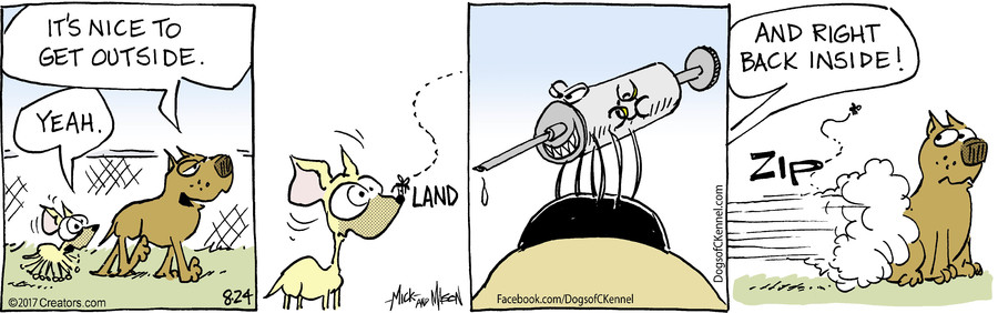 Dogs of C-Kennel for Aug 24, 2017