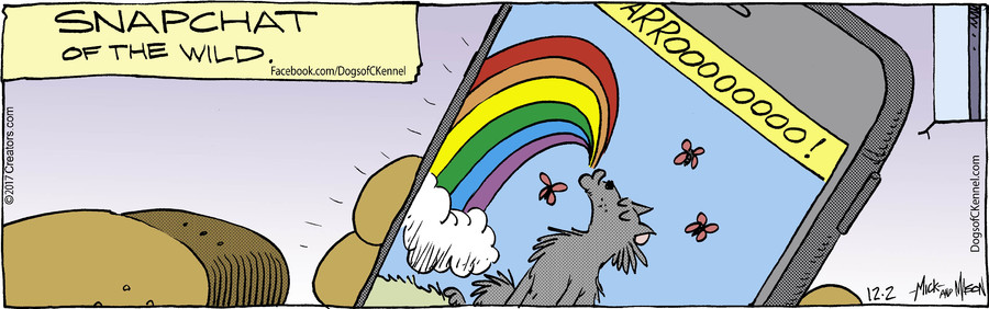 Dogs of C-Kennel for Dec 02, 2017