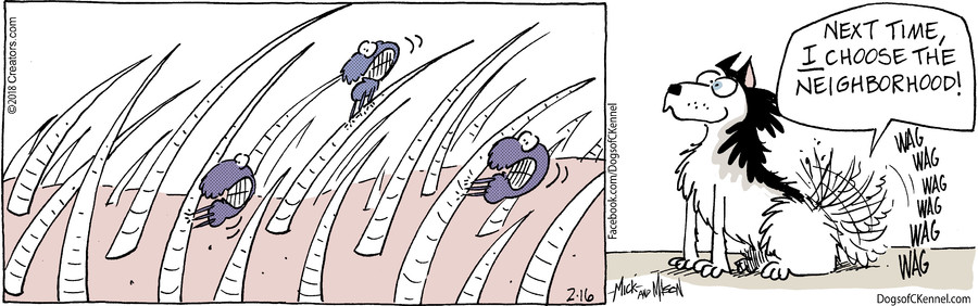 Dogs of C-Kennel for Feb 16, 2018