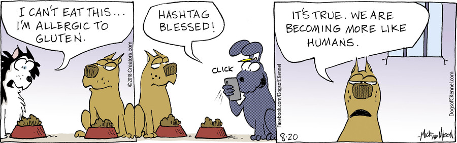 Dogs of C-Kennel for Aug 20, 2018