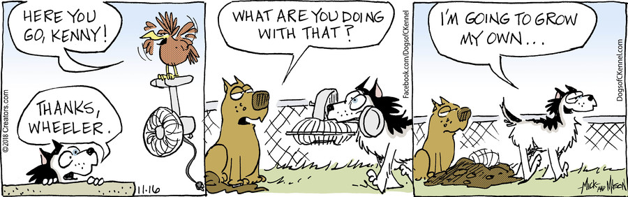 Dogs of C-Kennel for Nov 16, 2018