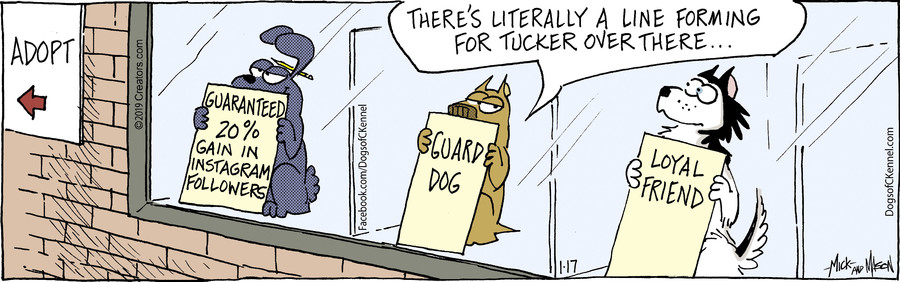 Dogs of C-Kennel for Jan 17, 2019