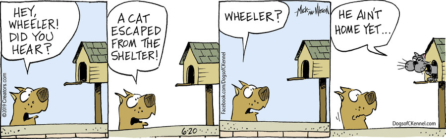 Dogs of C-Kennel for Jun 20, 2019