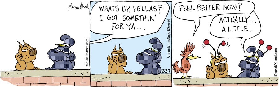 Dogs of C-Kennel for Feb 27, 2020