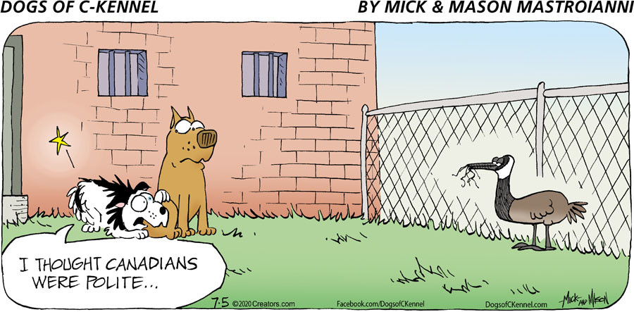Dogs of C-Kennel for Jul 05, 2020