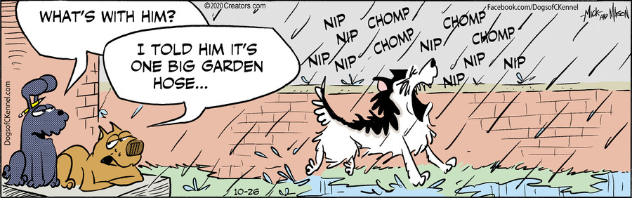 Dogs of C-Kennel for Oct 26, 2020