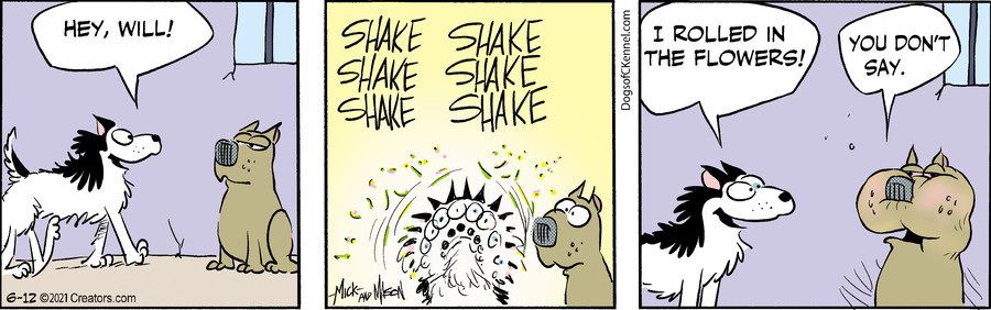 Dogs of C-Kennel for Jun 12, 2021